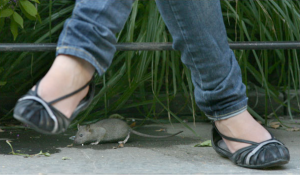 Rat Runs Under Girls Feet